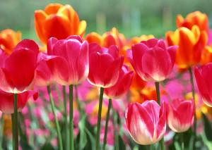 flower-back1474